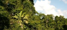 Parchi Naturali